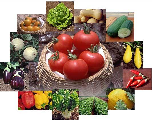 bio_vegetables